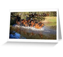 Horse muster Greeting Card