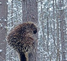 Prickly Situation by Charles Dillane