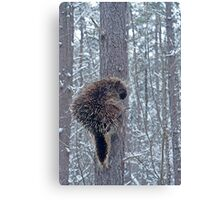 Prickly Situation Canvas Print