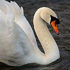 Classic swan pose by Martyn Franklin