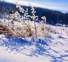 Frozen Wonderland by shsight