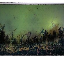 Northern Lights by Jenifer Wallis