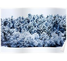 Snow Covered Forest Poster