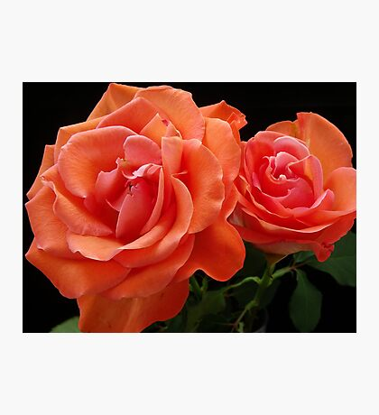 Double Rose Photographic Print