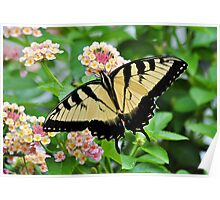 Tiger Swallowtail Butterfly On Pink Lantana Poster