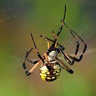 Along Came A Spider by Kathy Baccari