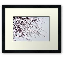 Tree Branch Nature Abstract Framed Print