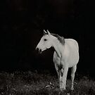 White Horse by NatureGreeting Cards ©ccwri