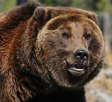 Smiling Bear by RedOwlPhoto