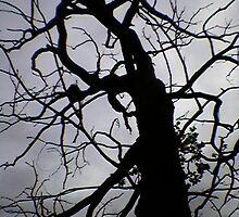 The Dark Tree. by Cioffi