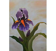 Purple Iris-Original Oil Painting 36x48 Photographic Print