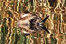 Ruddy Duck ~ Reflection Dreams by Kimberly Chadwick