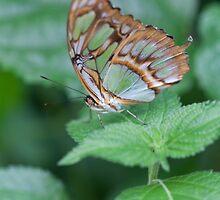 butterfly on the flower by spetenfia