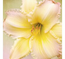 Big Yellow with the Pink Fringe  Photographic Print
