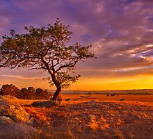 """""""Day's End At The Rocks"""" by Phil Thomson IPA"""