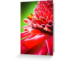 Tropical Gardens 5 - Ginger Torch Lily Greeting Card