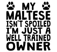 Well Trained Maltese Owner Photographic Print