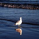 A Gull and His Reflection Gazing At the Sea by Jane Neill-Hancock