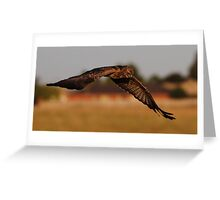 """Bird of Prey in Suburbia"" Greeting Card"