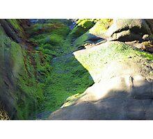 Algae Rock Photographic Print