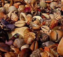 Shells 2012 by debsphotos