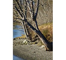 Trees on the Beach Photographic Print