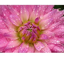 Pink Promise Photographic Print