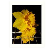 Daffodil Images Art Print