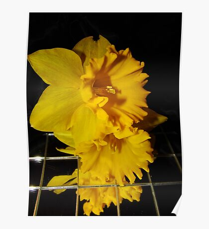 Daffodil Images Poster