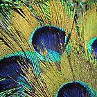 Peacock Fan by WildestArt