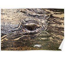 Gator Eye Poster