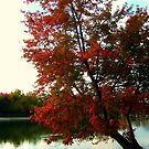 Beautiful Tree Growing out of the North Cove, Wayne NJ by Jane Neill-Hancock