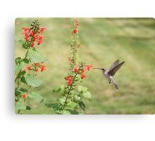 Hummingbird at flower. Canvas Print