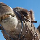 Camel face ! by Amanda Huggins