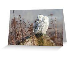 Snowy Owl Pair Greeting Card