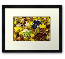 Overhead view on the fallen red, yellow and green maple leaves Framed Print