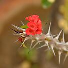 Cactus Bloom by redscorpion