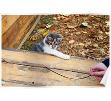 Small kitten playing in the autumn park Poster