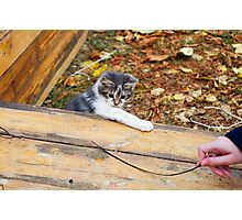 Small kitten playing in the autumn park Photographic Print