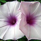 Lilac Beauty by Rocksygal52