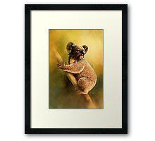 Sitting Koala Framed Print