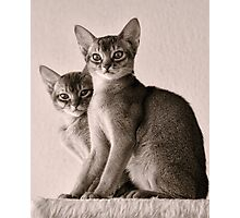 Abyssinian Kittens Photographic Print