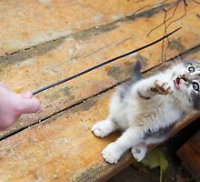 Small cute kitten playing with a twig in the street by vladromensky