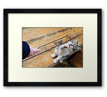 Small cute kitten playing with a twig in the street Framed Print
