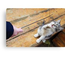 Small cute kitten playing with a twig in the street Canvas Print