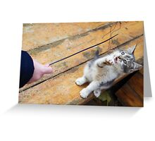 Small cute kitten playing with a twig in the street Greeting Card