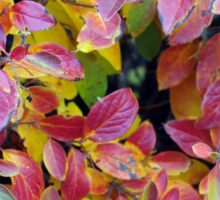 Background of bright red and yellow leaves of a bush Sticker