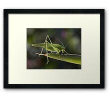 Tettigonia viridissima Framed Print