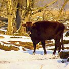YOUNG HECK BULL (At Nature reserve the Oostvaarders plassen) by Johan  Nijenhuis