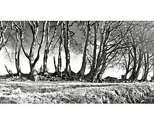 A Walk On The Quantocks  .. 4 by Mike  Waldron